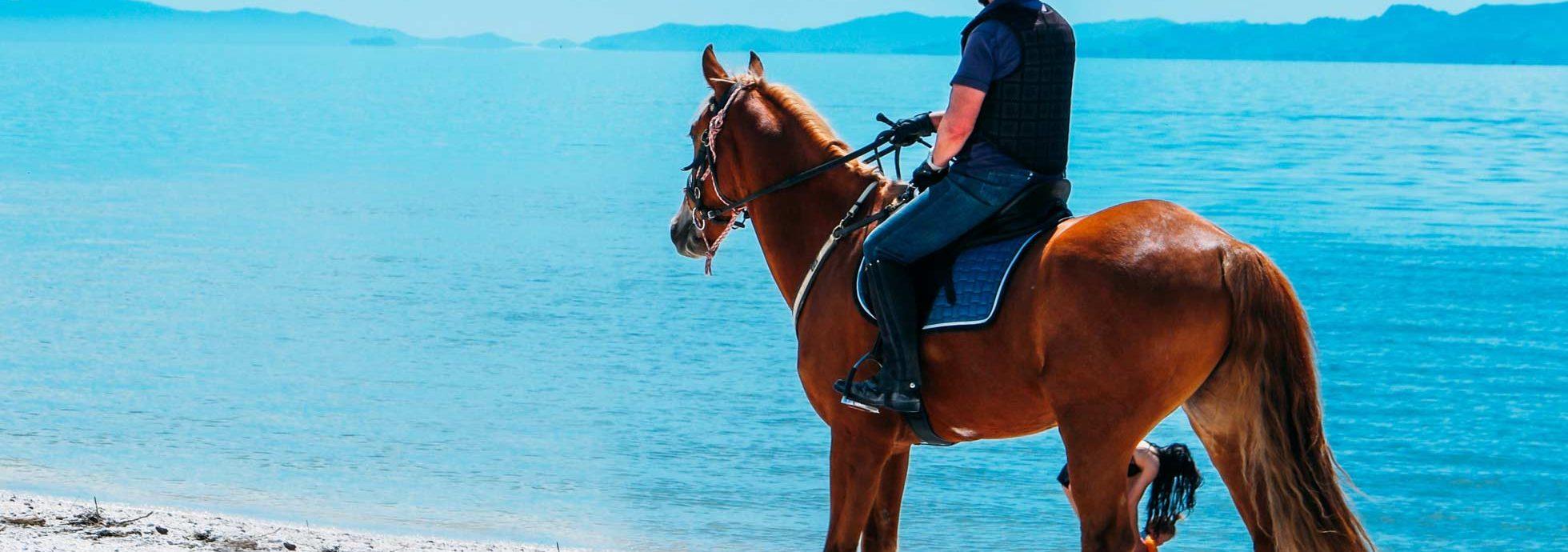 Take a horseback riding guided tour through Glacier National Park